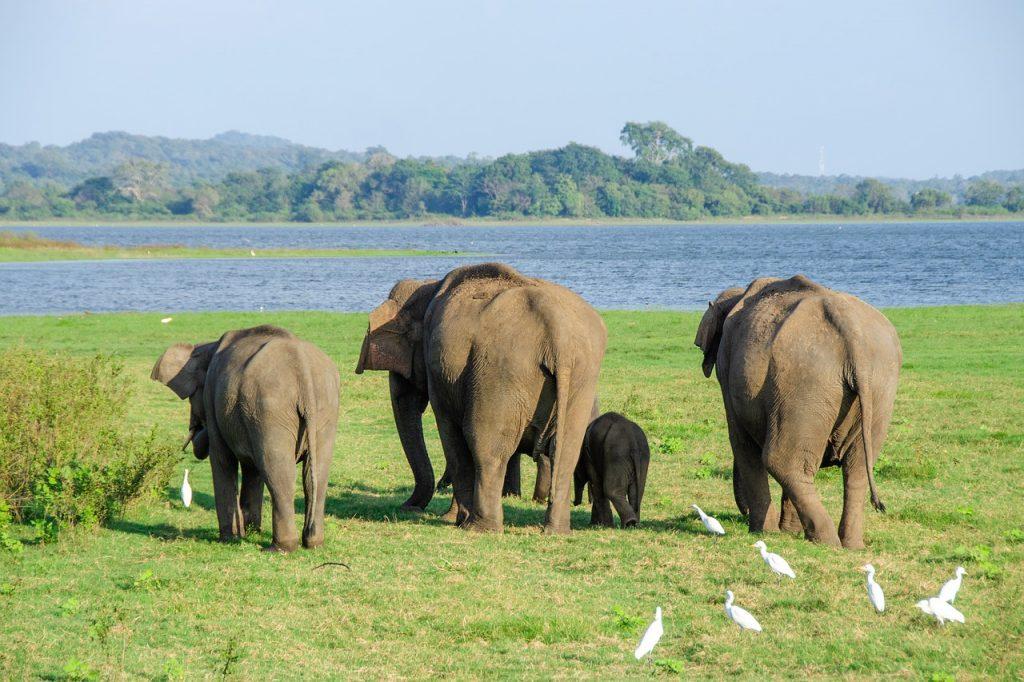 Sri Lanka Klimaat
